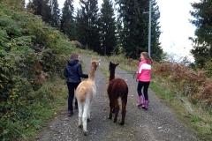 Wandern mit unseren Alpakas